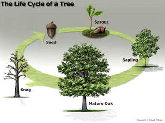 planting of trees essay Trees and your environment  planting trees can also help cool your home in the summer the arbor day foundation states that the overall effect of the shade.